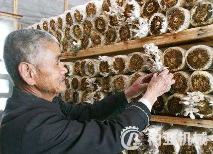 菇木切碎机
